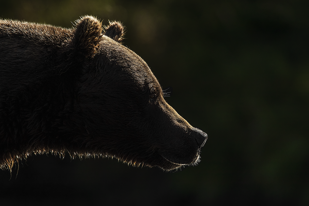The Pensive Bear, Dave Sandford