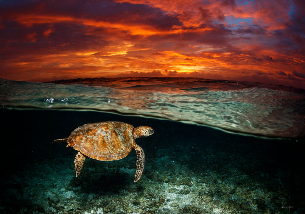 Green Turtle Dawn, Dave Sandford