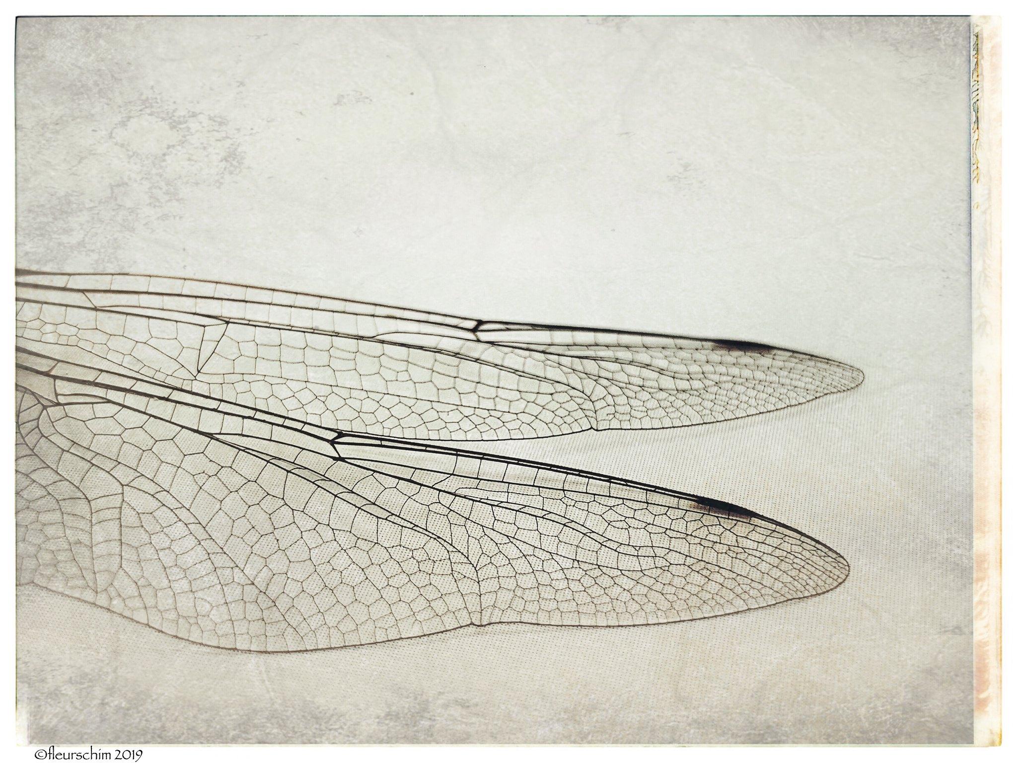 On a Wing © Fleur Schim
