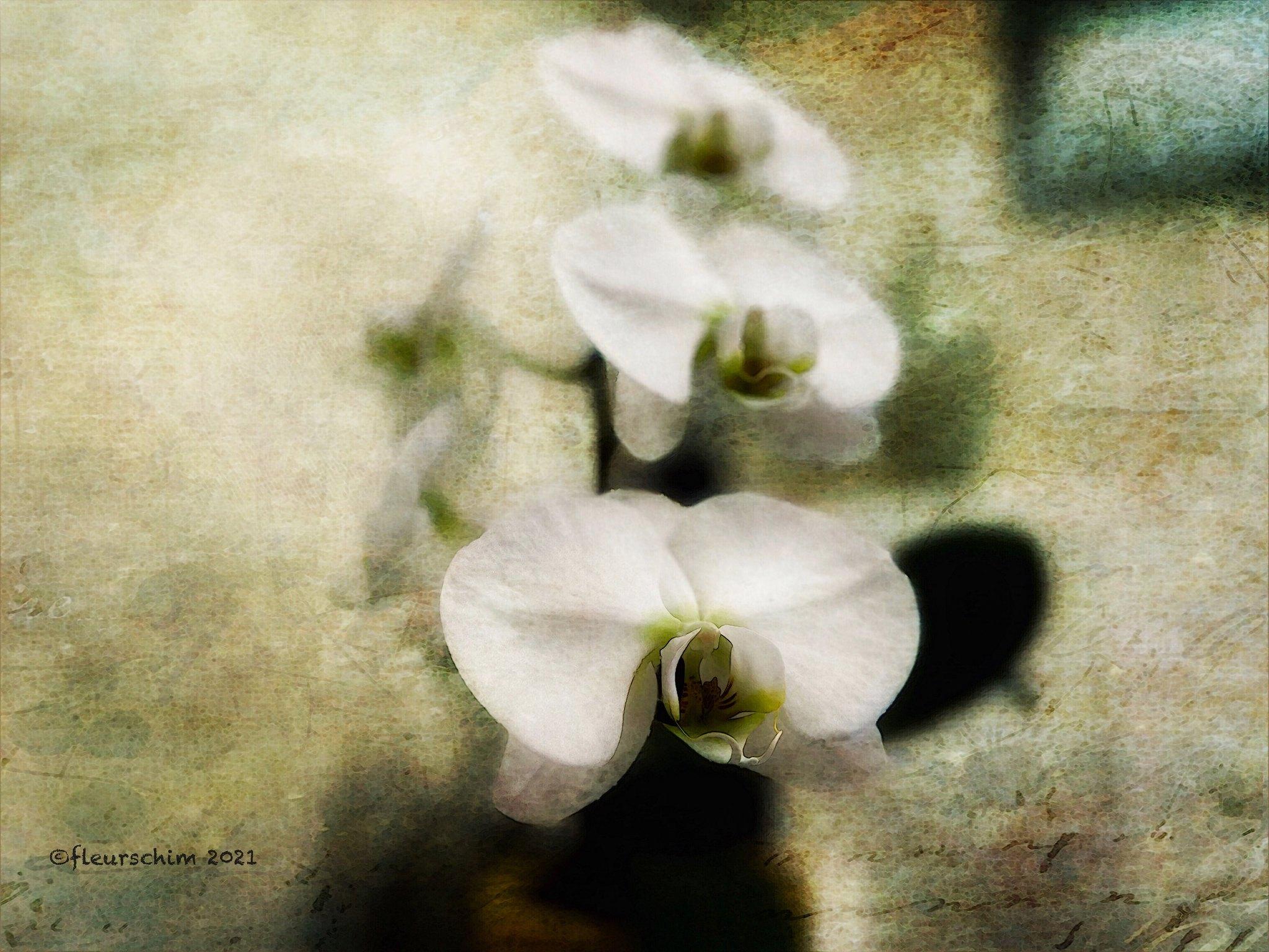 Visions © Fleur Schim
